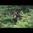 Orso in un parco canadese