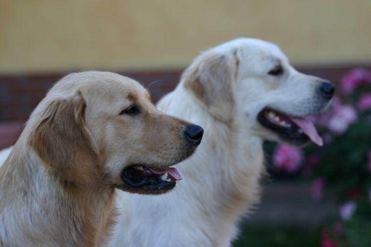 Winky e Wooffy